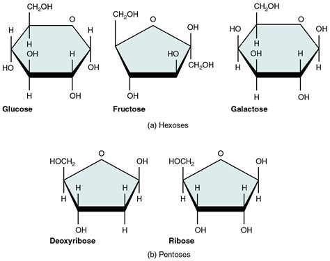 diagram of a carbohydrate monosaccharides