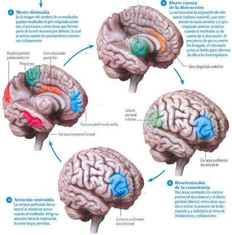 mindfulness en el liderazgo cã mo crear tu espacio interior para liderar con excelencia edition books neurociencia y meditaci 243 n mindfulness en palabras