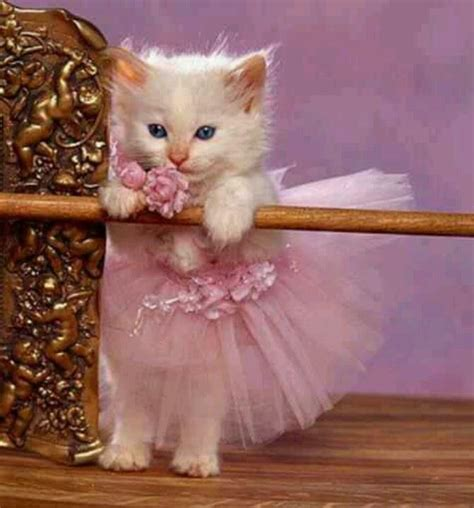 Pink Cat Dress by Cat In Pink Dress Www Pixshark Images Galleries