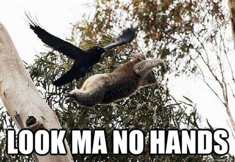 look ma no hands testing google s hands free payments video cnet koala meme memes quickmeme