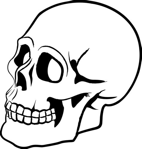skull vector 2 vector download