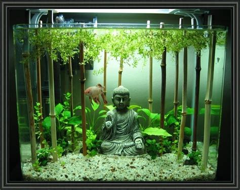Betta Tank Decor Ideas by 25 Best Freshwater Aquarium Ideas On Aquarium