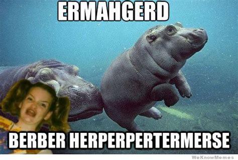 Berks Girl Meme - baby hippo aww