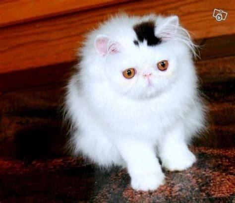 Cat Hat Topi Anak Lucu 50 gambar hewan lucu yang dapat mengembalikan mood kamu