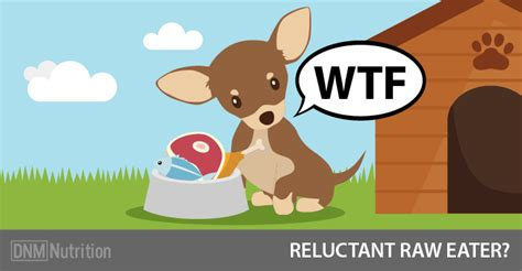 reluctant raw feeders words of encouragement raw pet food advice 7 tricks to get your dog to dig in