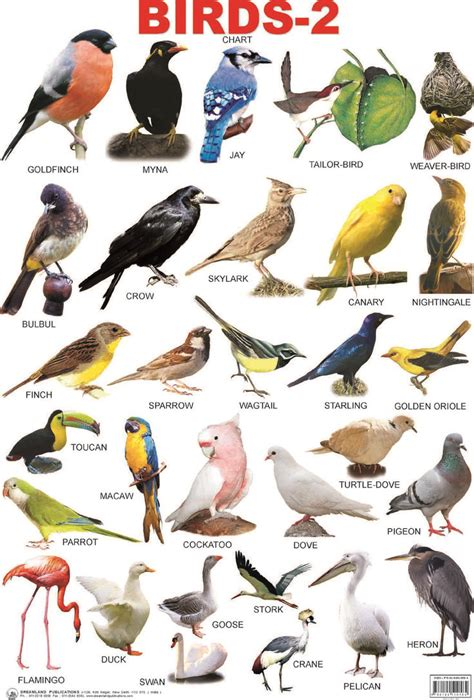 image gallery names birds