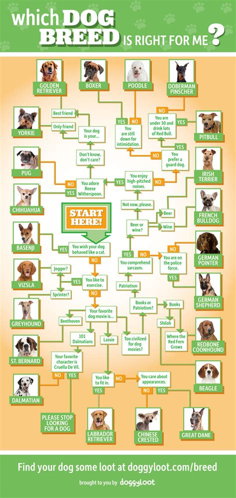 what is right for me which breed is right for me infographic familypet