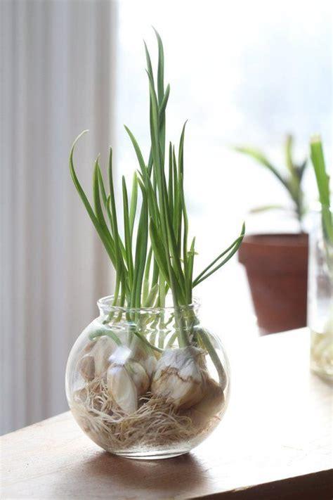 9 vegetables to grow indoors growing vegetables herbs indoors this winter herbs