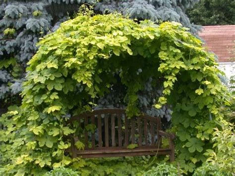 climbing fence plants 20 green fence designs plants to beautify garden design