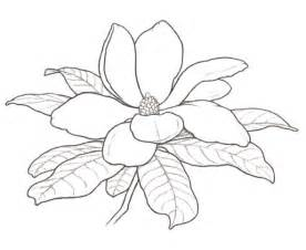 Magnolia Flower Coloring Page Sketch sketch template