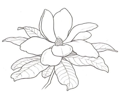 coloring pages of magnolia flowers state flowers coloring pages digis