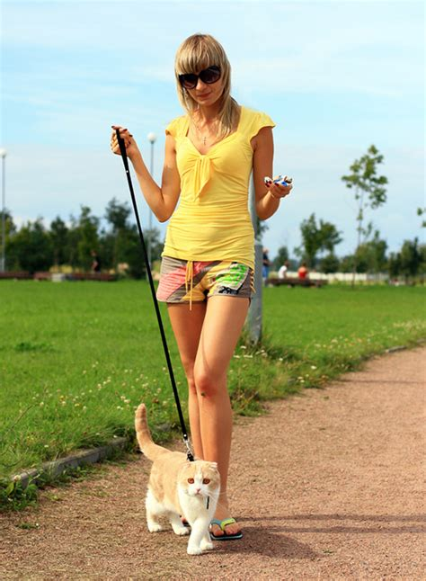 how to your to walk on a lead how to walk your cat on a leash cat catloversdiary