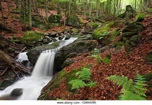 Mossy Green mountain wood fern stock photos amp mountain wood fern stock