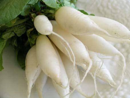 Ripped List White Rawis benefit of plants list of vegetables that can prevent cancer