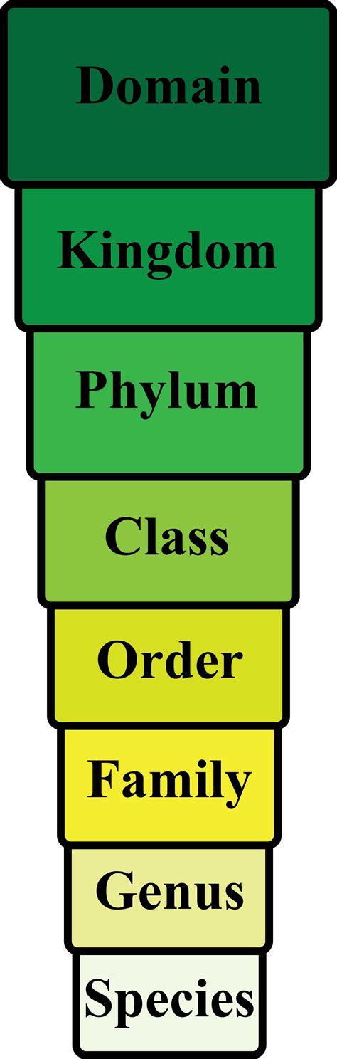by carolus linnaeus classification organism definition explanation video lesson