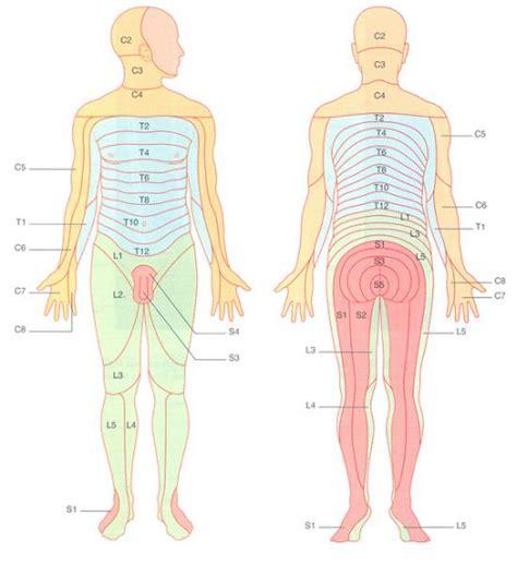 dermatomes map l4 dermatome map