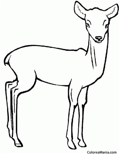 imagenes para colorear venado colorear corzo ciervo alce animales del bosque