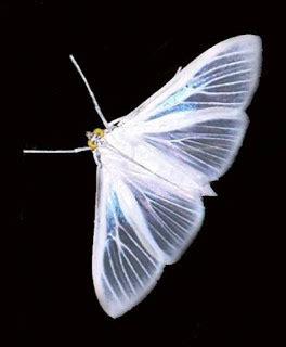 imagenes de mariposas blancas volando e ac 178 el laberinto de la felicidad