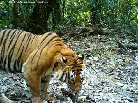 big animals  indian park devoid