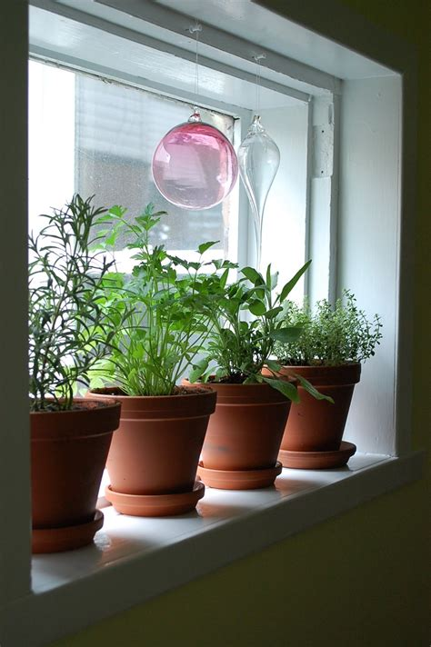 kitchen window herb garden fiona bailey window herb garden amp little birdies