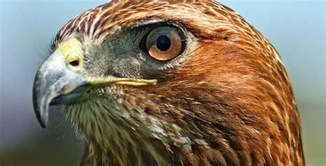 top  birds    kill  listverse