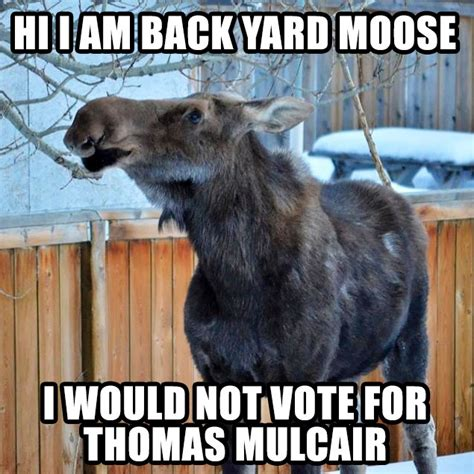 Canadian Moose Meme - le new meme canadian back yard moose who would not vote