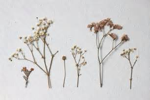 pressed flowers we can make anything pressed flowers