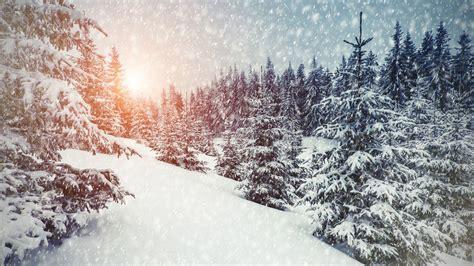 wallpaper winter snowfall forest sunlight  nature