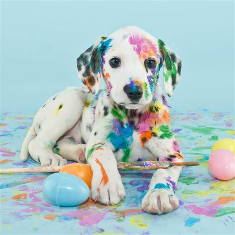 puppy eggs easter egg hunt for dogs benefit for gateway pet guardians four muddy paws a self