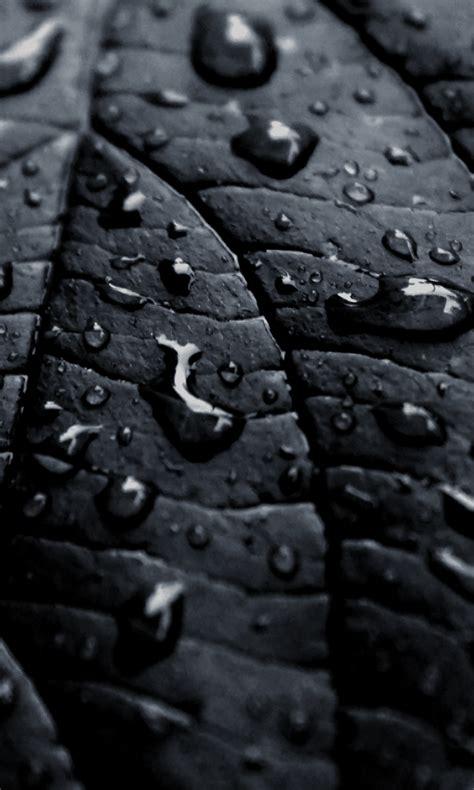 wallpaper black leaf blackberry z10 wallpapers black leaf