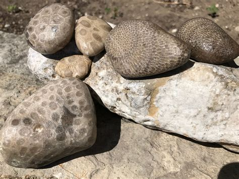 where to find petoskey stones in michigan michigan