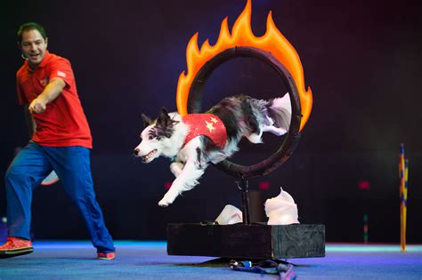 puppy experience stunt experience showcases rescue dogs in interactive high energy show thurstontalk
