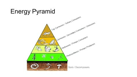 Diagram Of Pyramid Of Energy diagram energy pyramid diagram