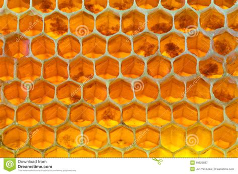 patterns in nature honeycomb honeycomb royalty free stock photography image 18625887