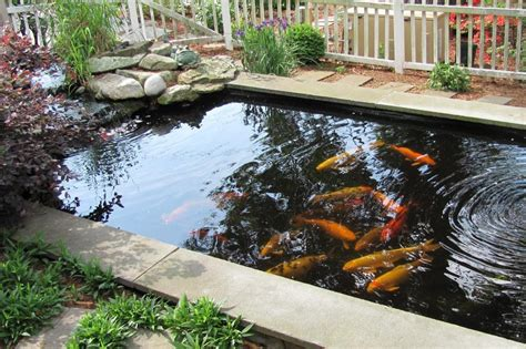 artikel membuat senapan ikan mau membuat kolam koi harus mulai dari mana