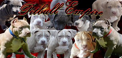 how do you your not to bite how to stop a puppy biting his lead dogs and breeds how do you a pitbull puppy
