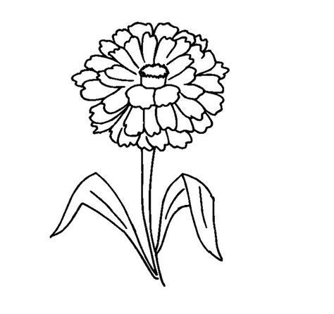Coloring Page Zinnia by Zinnea Clipart Black And White Pencil And In Color