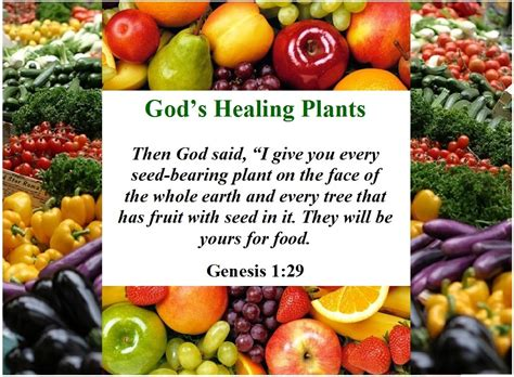 where the gods plants and peoples of the books about god s healing plants