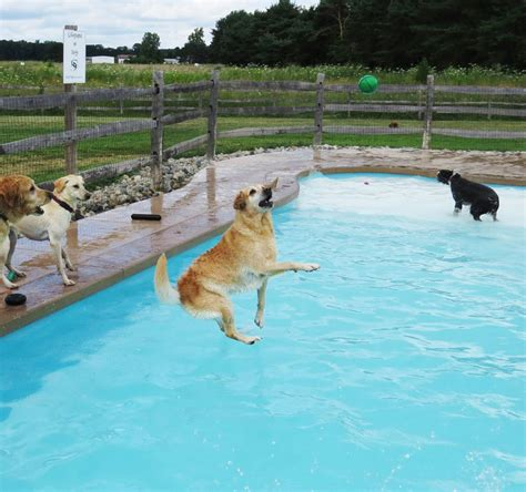 the lucky puppy pool lucky puppy 5 newslinq