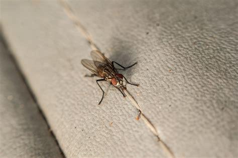 insetti da casa come effettuare una corretta disinfestazione dagli animali