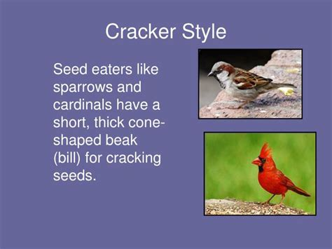 what do cracker beak birds eat ppt did you why so many bird beaks powerpoint presentation id 1463486