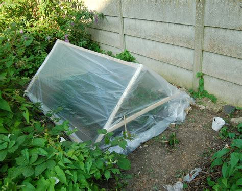 plastic plants for the garden how to protect your plants the winter plastic garden
