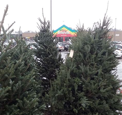 christmas tree locations in central wi explore marshfield