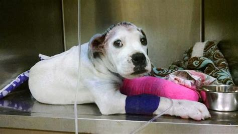 rescue dogs rock rescue tenderly reaches his paw out to comfort puppy
