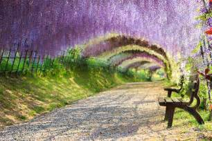 Flower Tunnel by 15 Of The World S Most Beautiful Tree Tunnels And How To