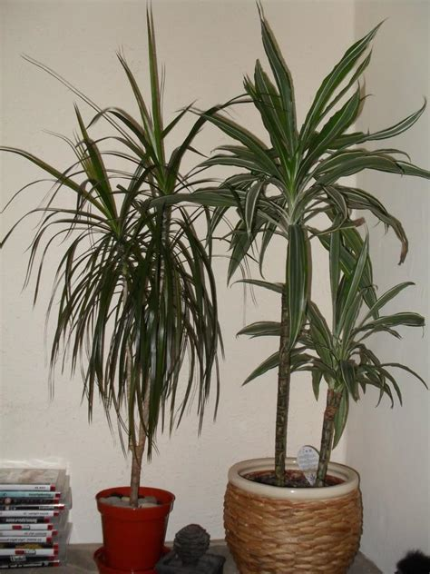 common house plants pdf identifying house plants photo