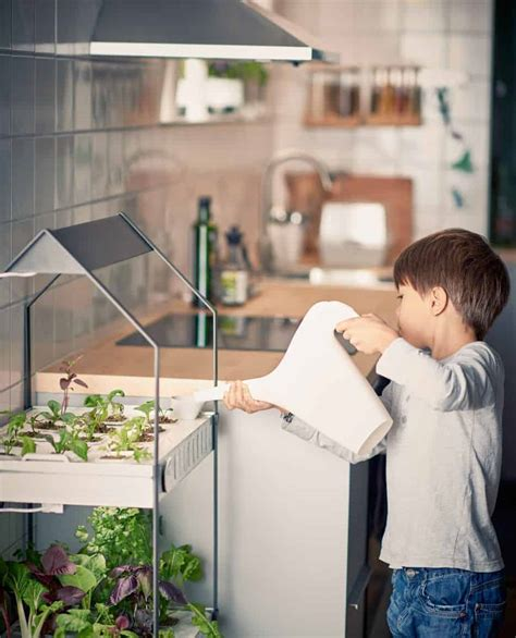 indoor gardening great ideas  grow food  family