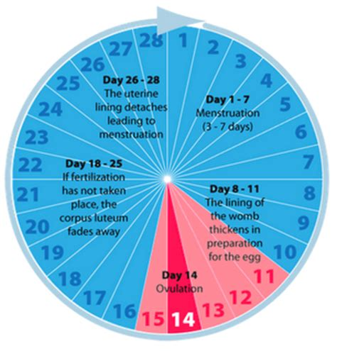 how much time does it take to discharge a capacitor menstrual cycle phases discharge