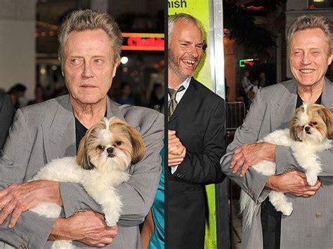 bonny shih tzu christoper walken and bonny puppies other