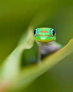 cute lizard dont  mom